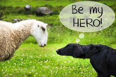 Dog Meets Sheep, Text Be My Hero Stock Images