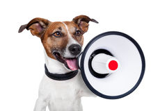 Dog megaphone. Dog shouting into a white and red megaphone Royalty Free Stock Image