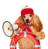Dog with a megaphone stock photo