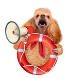 Dog with a megaphone. Stock Photo