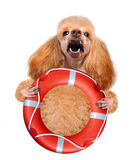 Dog with a megaphone. Royalty Free Stock Image