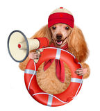 Dog with a megaphone. Stock Image