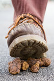 Dog mess. Man walking on dog mess Stock Photo