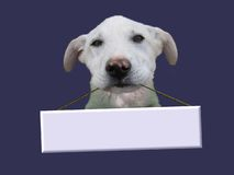 Dog with message. Jocular scene of the dog with message Stock Image