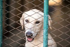 Dog in a metal cage. Dog in a metal cage at a stray dog center. Dubai, UAE Royalty Free Stock Photos