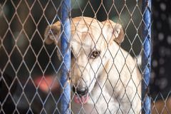 Dog in a metal cage. Dog in a metal cage at a stray dog center. Dubai, UAE Royalty Free Stock Images