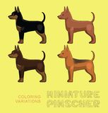 Dog Miniature Pinscher Coloring Variations Vector Illustration Stock Photos