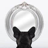 Dog at the mirror Royalty Free Stock Photos