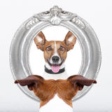 Dog at the mirror. Jack russell dog looking at the mirror his  crazy silly funny face Stock Photo