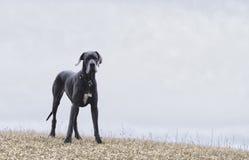Dog on a misty hill Stock Photo