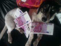 Dog and money. Cute dog with large Euro banknotes looking at the camera Stock Images