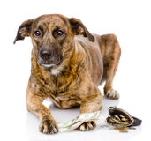 Dog with money. isolated on white background Stock Image