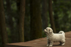 A dog. Morning Breathing Air Stock Images