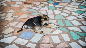 Dog on mosaic floor Stock Photography
