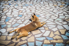 Dog on mosaic floor Royalty Free Stock Photography