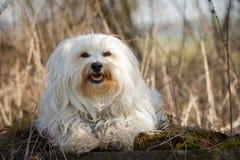Dog on moss Stock Image