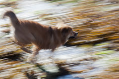 Dog in motion Stock Photo