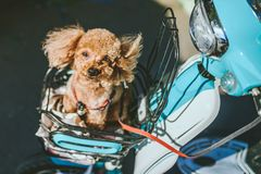 Dog in motorbike. Beijing, China Royalty Free Stock Images