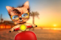 Dog on motorbike with travel background. Funny adorable dog sitting on a motorbike and wearing sunglasses with travel background. Holiday and vacation concept Royalty Free Stock Photos