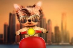 Dog on motorbike with travel background. Funny adorable dog sitting on a motorbike and wearing sunglasses with travel background. Holiday and vacation concept vector illustration