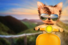 Dog on motorbike with travel background. Funny adorable dog sitting on a motorbike and wearing sunglasses with travel background. Holiday and vacation concept Stock Photo