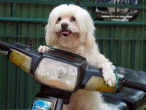 Dog on Motorcycle! Royalty Free Stock Image