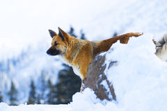 Dog on mountain Stock Photo