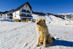 Dog at the mountain Royalty Free Stock Photo