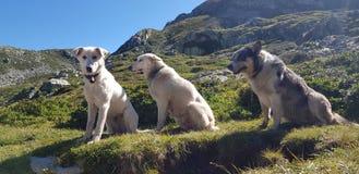 Dog sky mountain lake stock photography