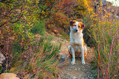 Dog on mountain footpath Royalty Free Stock Photo