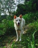 Dog on the mountain Stock Photo