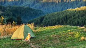 Dog in the mountain next to a tent at sunrise Stock Photo