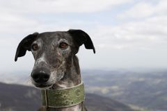 Dog in mountain Royalty Free Stock Image
