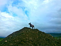 Dog of the mountain. Dog standing proudly atop a hill Stock Photos