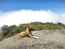 A dog in the mountain. Traveling with pets royalty free stock photo