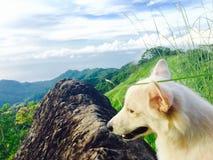 Dog on the mountain rock Stock Image