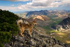 The dog in the mountains Stock Photography