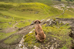 Dog in a mountains Stock Photography