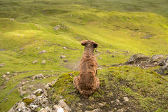 Dog in a mountains Stock Image
