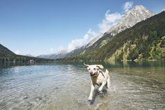 Happy dog in mountains Royalty Free Stock Image