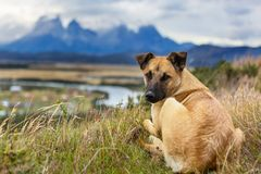 Dog. In mountains meadow stock images