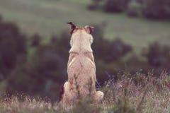 Dog. In mountains meadow stock photos