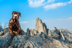 Dog in the mountains Royalty Free Stock Images
