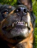 Dog mouth Stock Photo