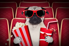 Dog at the movies. Dog watching a movie in a cinema theater, with soda and popcorn wearing glasses Stock Image