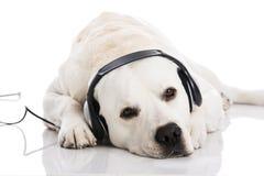 Dog and music stock photo
