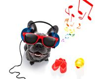 Dog with music earphones Royalty Free Stock Photos