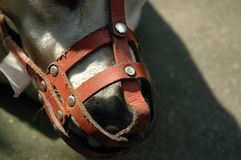 Dog Muzzle Royalty Free Stock Image