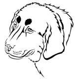 Dog muzzle contour Stock Photos