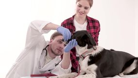 Dog with muzzle. Female owner puts off muzzle from dog before medical checkup. Pet care concept stock footage